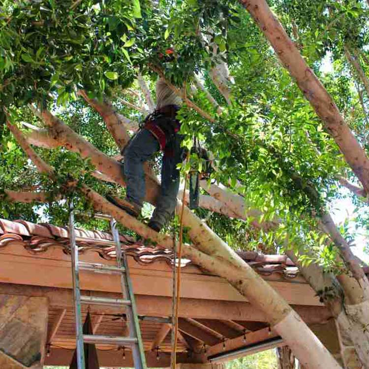 sistema soporte árbol