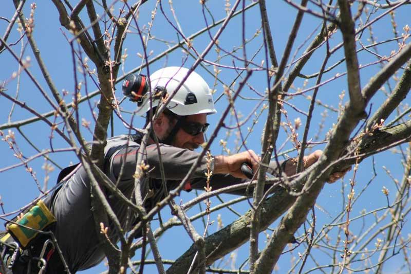 Mantenimiento preventivo y cuidado de arboles