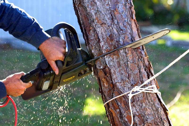 eliminación de árboles